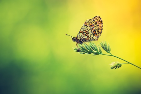 nature photo: Vintage photo of beautiful butterfly sitting on plant. european insect photographed in nature