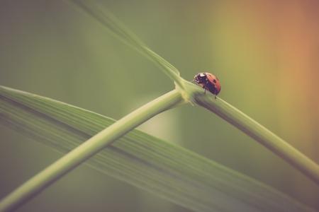 ladybug on leaf: Beautiful vintage photo of ladybug sitting on plant. Nature background with vintage mood effect