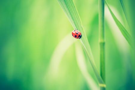 lomography: Beautiful vintage photo of ladybug sitting on plant. Nature background with vintage mood effect