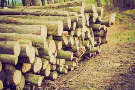 lomography: Vintage photo of cutted wood in forest. Photo with strong vintage mood effect