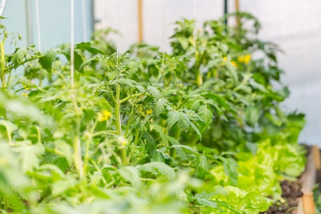 Vegetables Production Stock Photos Images, Royalty Free Vegetables ...