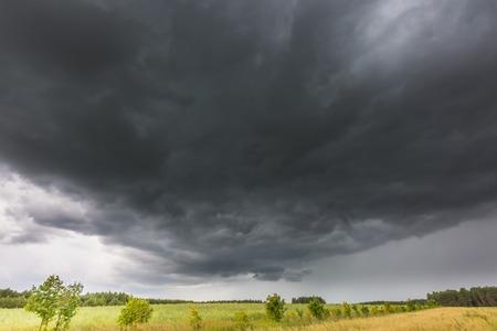 frightening: Summer landscape with storm sky over rye field. Frightening dark sky of thunderstorm over land