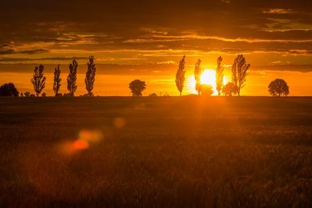 cielo atardecer: Cielo hermoso atardecer de verano sobre el campo. Paisaje con el cielo de color naranja puesta de sol sobre archivada y �rboles.