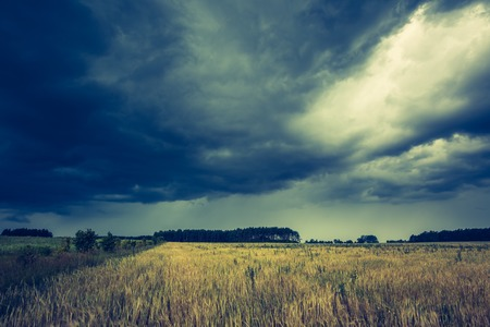 frightening: Vintage photo of dark stormy clouds over corn field at summer. Frightening storm over countryside.