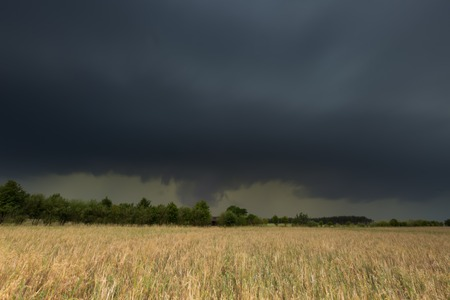 Dark stormy clouds over corn field at summer. Frightening storm over countryside. Stock Photo