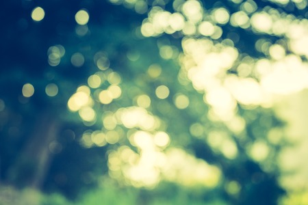 cross process: Abstract photo of defocused summer forest, photo useful as background. Vintage mood effect