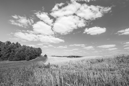 stubble field: Stubble field under sky with white clouds. Black and white photo. Summertime landscape. Polish countryside.