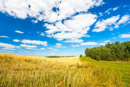 stubble field: Stubble field under blue sky with white clouds. Summertime landscape. Polish countryside. Stock Photo