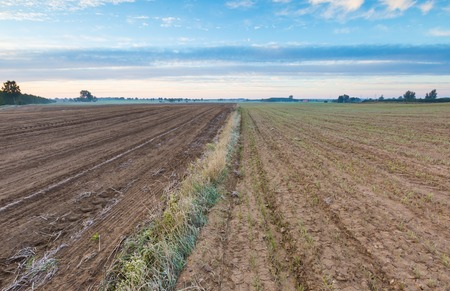 plowed: Autumnal plowed field landscape. Morning landscape of polish countryside with plowed field on foreground.