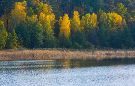 tele: Beautiful landscape of autumnal forest near lake. Distant landscape photographed with tele lens. Autumnal colorful trees.