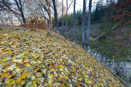 chewed: Landscape with trees gnawed by beavers. Place near beaver dam in autumnal forest Stock Photo