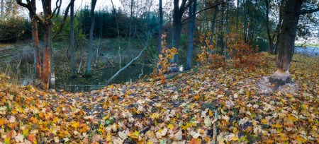 animal den: Landscape with trees gnawed by beavers. Place near beaver dam in autumnal forest. panoramic landscape Stock Photo