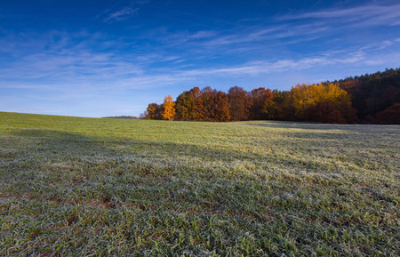 green fields: Green field at autumnal morning. Beautiful polish landscape photographed in october at cold morning.