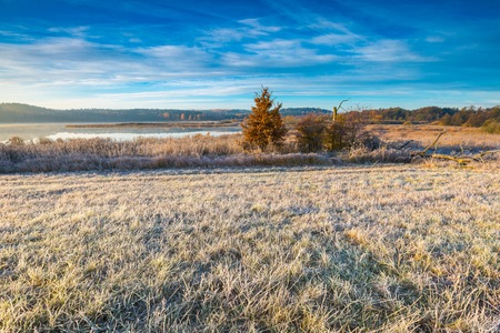 countryside landscape: Autumnal cold morning on meadow with hoarfrost on plants and beautiful colors. Polish landscape photographed in late october. Stock Photo