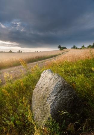 caes: Corn field landscape, polish field at summer
