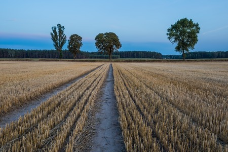 stubble field: Stubble field landscape. Polish after harvest landscape