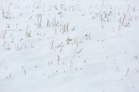 snowbanks: Snow field background with withered grass. Winter background Stock Photo