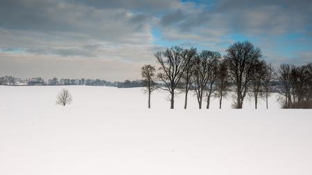 snowy field: Winter snowy field landscape. Polish fields after blizzard.