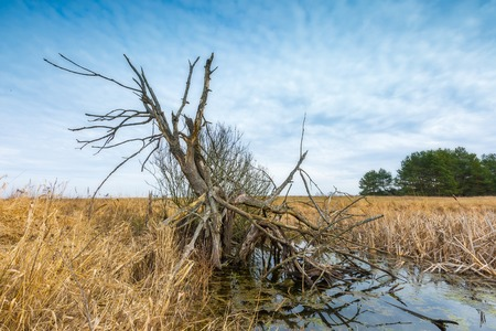 wetland: Early springtime on meadow near wetlands. Flooded meadow under cloudy sky. Polish landscape