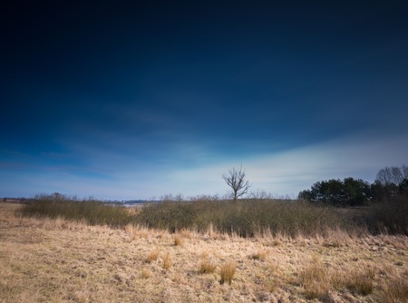 lonely tree: Early spring meadow landscape in Poland. Beautiful polish landscape with withered lonely tree and halo near sun