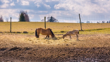 animal park: Przewalski horse and davids deer eating hay in animal park Stock Photo