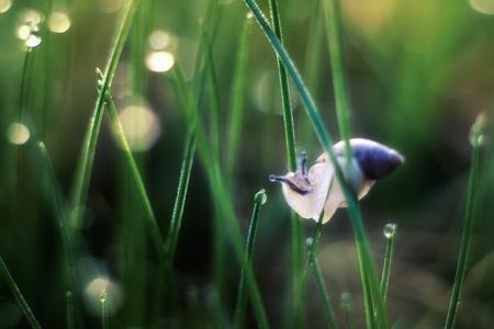 Hermaphrodite: Beautiful snail macro. Close up of gastrophod sitting on plant. Stock Photo