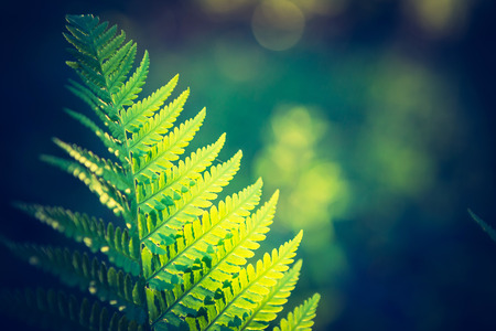 tropical native fern: Vintage photo of beautiful fern leaves growing in forest. Natural background