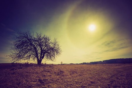 Vintage photo of polish fields with withered tree and halo clouds near sun. Stock Photo