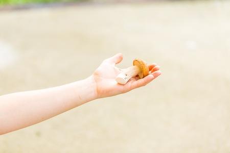 mushroom picking: Woman hand holding eatable mushroom (Boletus) on defocused background. Fresh picked mushroom. Stock Photo