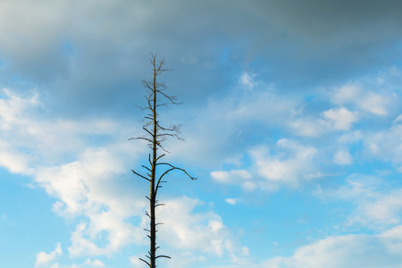 Beautiful cloudy sky with withered tree. Background of lifeless tree agains cloudy sky background
