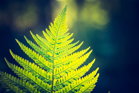 screen savers: Vintage photo of beautiful fern leaves growing in forest. Natural background