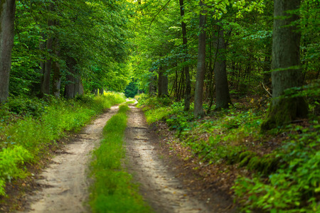 Natural polish landscape with forest path. Green summer forest in Poland. Stock Photo