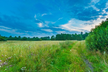 masuria: Wild meadow landscape. Polish grassland or meadow photographed at summer evening. Stock Photo