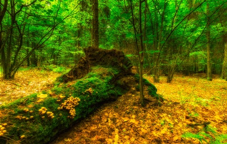 Green european wild forest in summer. Debowa Gora nature reserve in Poland.