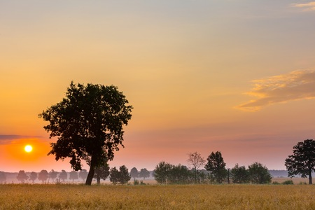 tele up: Summer sunrise over fields and trees silhouettes. Close up sun in polish countryside.