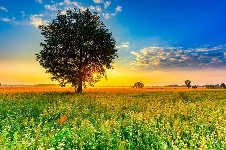 Sommer Morgen Landschaft auf Buchweizen-Feld mit Unkraut. Schöne nach Sonnenaufgang Landschaft mit Bäumen und Feldern.