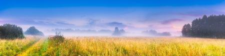 fields of flowers: Wild foggy meadow landscape. Summer grassland under sunset or sunrise sky and fog. Misty landscape.