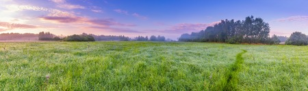 Beautiful hazy meadow at summer sunrise. Calm and tranquil place with untouched wild meadow at sunrise.