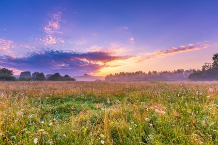untouched: Beautiful hazy meadow at summer sunrise. Calm and tranquil place with untouched wild meadow at sunrise.