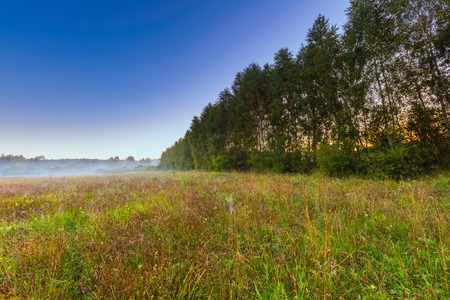 cutted: Morning foggy meadow in polish countryside. Beautiful sunrise on wild meadow