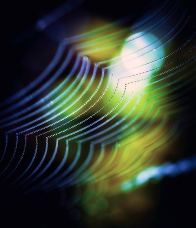 arachnoid: Close up of spider web in morning light. Abstract background.