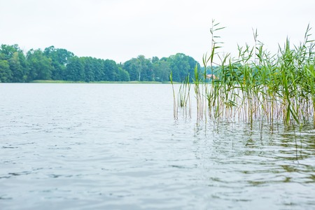 warmia: Polish lake landscape. Bad weather and lake shore with reeds. Stock Photo