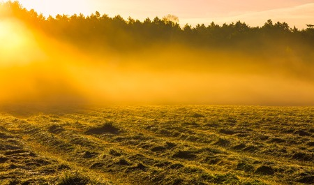 cutted: Morning foggy meadow landscape in polish countryside. Polish morning landscape.