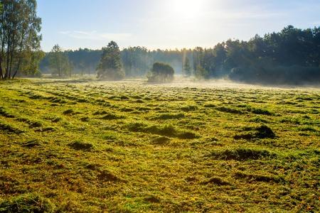 haymaking: Morning foggy meadow landscape in polish countryside. Polish morning landscape.