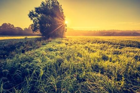 폴란드에서 안개가 풀밭에 역동적 인 풍경의 빈티지 사진.