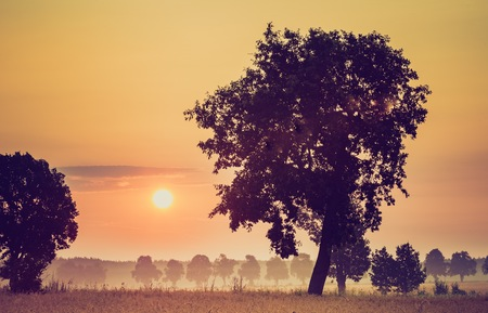 Vintage photo of summer sunrise over fields and trees silhouettes. Close up sun in polish countryside.