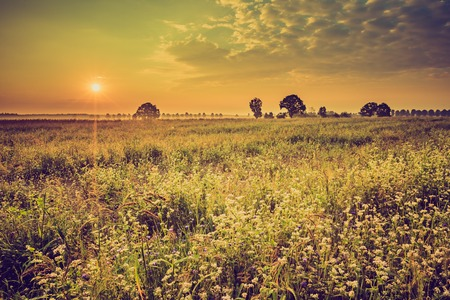 Vintage photo of summer sunrise over blooming buckwheat field with weeds.