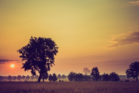 tele up: Vintage photo of summer sunrise over fields and trees silhouettes. Close up sun in polish countryside.