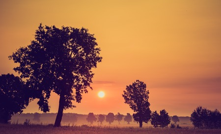 Vintage photo of cereal field with old tree, landscape photographed at morning Stock Photo