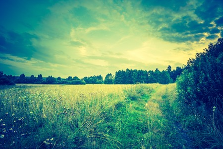 Vintage photo of summer meadow at afternoon, european landscape.